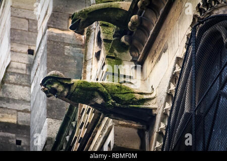 Gothic gargoyles covered in moss on the facade of the famous Notre Dame de Paris Cathedral in Paris France with rain drops falling from their mouth - Stock Photo
