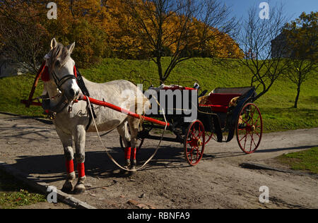 An elegant harnessed horse with a carriage stands on the road against the backdrop of an autumn park with yellow leaves - Stock Photo
