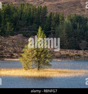 Isolated trees on Loch Cill Chriosd, Isle of Skye, Scotland - Stock Photo