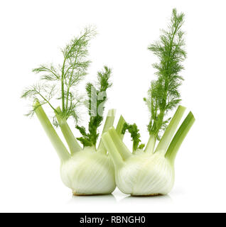 Fresh fennel bulbs isolated on white background - Stock Photo