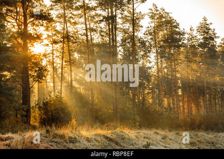 Sun rays in the autumn morning frosty landscape in forest - Stock Photo