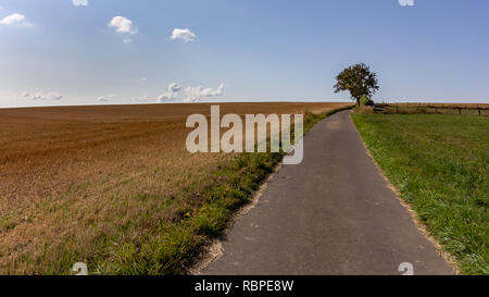 Paved public footpath leading to a single lonely tree through farmland fields in rolling hills of Luxembourg - Stock Photo