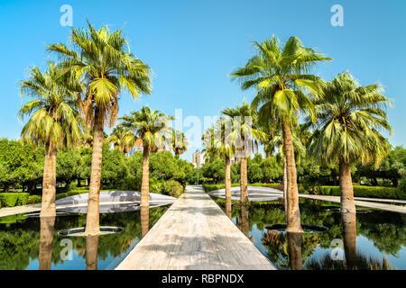 Palm Grove in Al Shaheed Park, Kuwait City - Stock Photo