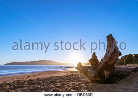Cable Bay Sunrise log - Stock Photo