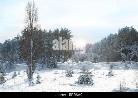 Pine trees covered with snow on frosty evening. Beautiful winter forest landscape at snowfall - Stock Photo