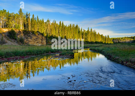 Salt tolerant vegetation (Red samphire) growing along the shore of the Salt River, Wood Buffalo National Park, Alberta, Canada - Stock Photo
