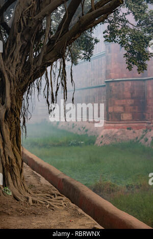 Early morning misty scene with a banyan tree in front of the Red Fort, Delhi, India - Stock Photo