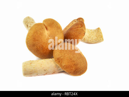 Shiitake mushrooms / Raw fresh Shiitake mushroom isolated on white background for cook food - Stock Photo