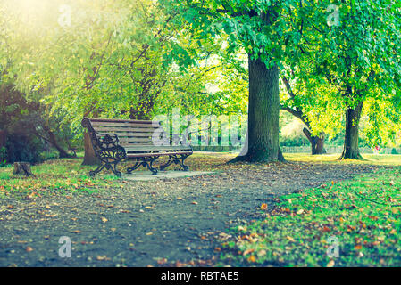 Lonely Bench under the tree in the park. Selective focus, copy space - Stock Photo