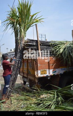 Bangalore, India. 12th Jan, 2019. Bundles of sugarcane are being stocked outside a wholesale market on the eve of Makar Sankranti Festival, in Bangalore, India, Jan. 12, 2019. People exchange pieces of sugarcane to signify sweetness during Makar Sankranti, a Hindu festival which marks the return of the sun to the northern hemisphere. Credit: Stringer/Xinhua/Alamy Live News - Stock Photo