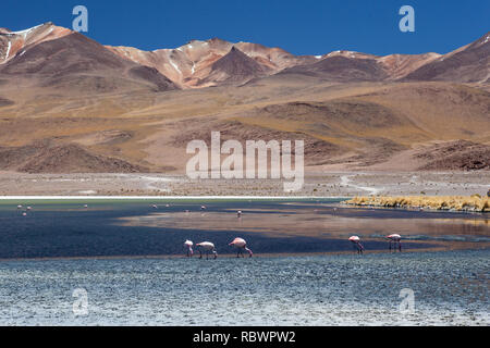 High on the Bolivian altiplano the mineral rich mountains show their colours and flamingos feed lazily in the toxic waters of the lake below. - Stock Photo