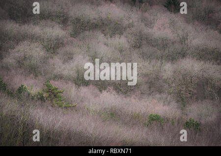 Treetop close-up in winter - Stock Photo