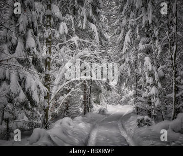 DE - BAVARIA: Wintry forest scene near Bad Tölz  (HDR-Image) - Stock Photo