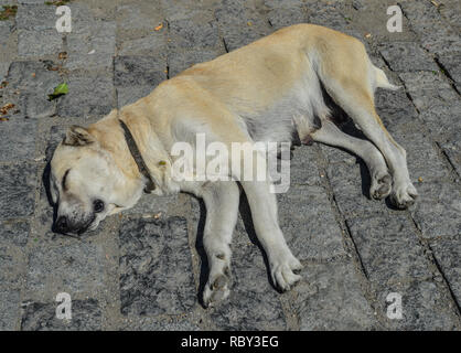 A lazy dog sleeping on street in Mtskheta, Georgia. - Stock Photo