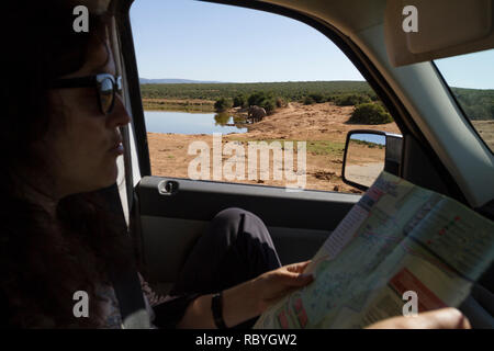 Passenger in car on safari looking at the map of Addo Elephant National Park, South Africa - Stock Photo