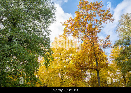 Autumn trees, Autumn foliage, autumn leaves - Stock Photo