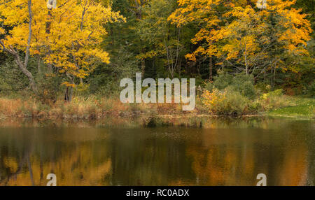 Autumn leaves in the forest reflected in he river in Muskoka