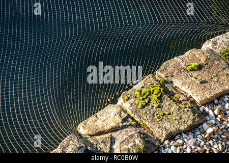 Closeup of netting protecting fish in a garden pond at a home in Sheffield, South Yorkshire. - Stock Photo