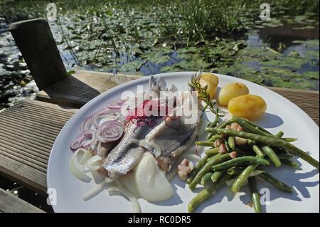 junger Matjes mit grünen Bohnen, Zwiebeln und Salzkartoffeln | young herring, matie, with string beans, onions and boiled potatoes - Stock Photo