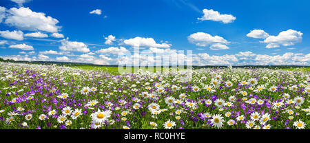 spring landscape panorama with flowering flowers on meadow. white chamomile and purple bluebells blossom on field. panoramic summer view of blooming w - Stock Photo