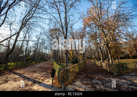 Trees leaves in the Parque del Retiro, Madrid, Spain - Stock Photo