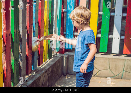 The boy feeds goats in the zoo - Stock Photo