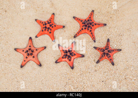 Red starfish on white sand on sunny tropical beach. five-star hotel by the sea concept - Stock Photo