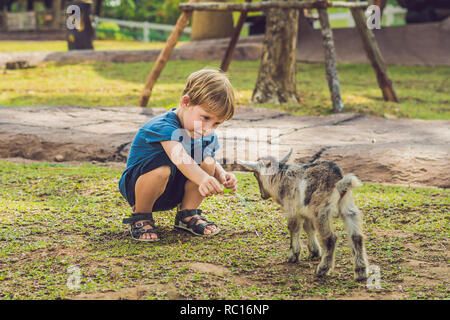 Small cute boy is feeding a small newborn goat - Stock Photo