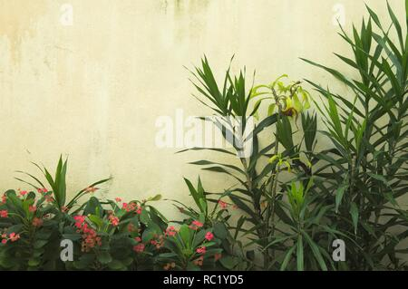 Ruined wall background with a green plant and red flowers (Ari Atoll, Maldives) - Stock Photo