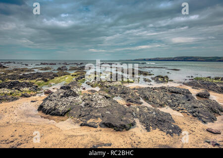 Beautiful scenery of dramatic Pembrokeshire coastline,South Wales, Uk.Rocks covered with seaweed on sandy beach, turquoise sea and moody sky.Scenics. - Stock Photo