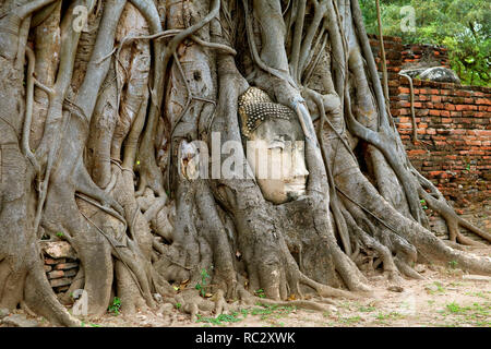 Head of the Buddha Image in the Bodhi Tree Roots, Wat Mahathat Ancient Temple, Ayutthaya Historical Park, Archaeological site in Thailand - Stock Photo