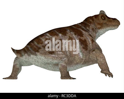 Keratocephalus Dinosaur - Keratocephalus was a primitive herbivore dinosaur that lived in South Africa during the Permian Period. - Stock Photo