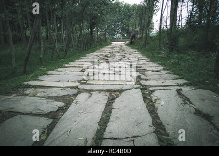 A cobblestone path leading to a dense forest in Manasbal Kashmir. Moody dark look - Stock Photo