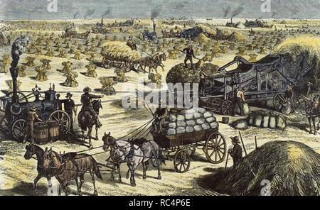 American West. Dakota. 19th century. Wheat harvesting by steam threshing machines on an agricultural farm. Colored engraving, 1878. - Stock Photo