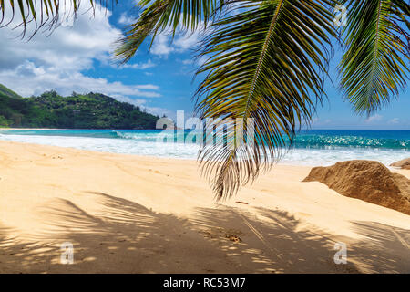 Sandy beach with palms and turquoise sea in Caribbean island.