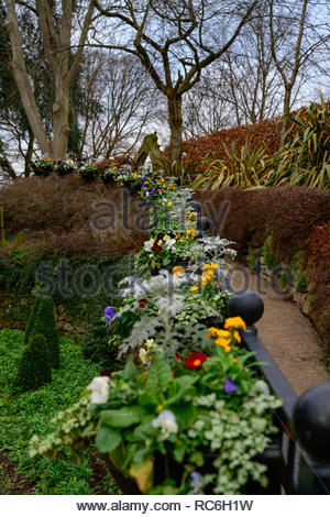 Shrewsbury, UK. 14th January 2019. Spring flowers planted along a handrail on the Dingle Area of Shrewsbury's Quarry park brighten a dull winters day. Credit: Phil Pickin/Alamy Live News - Stock Photo