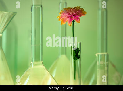 detail shot showing a variety of laboratory glassware including a flower head in green ambiance - Stock Photo