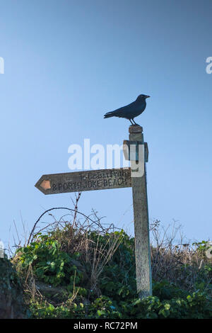 A Carrion Crow Corvus corone perched on a wooden signpost near the South West Coast Path on Pentire Point West in Cornwall. - Stock Photo