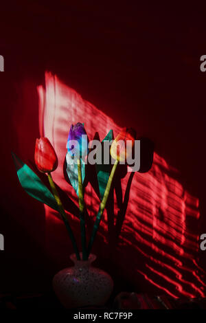 colourful wood tulip flowers in a dark room with directional lighting through wooden blinds - Stock Photo