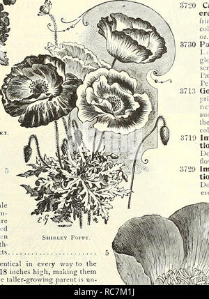 . Dreer's garden calendar : 1903. Seeds Catalogs; Nursery stock Catalogs; Gardening Equipment and supplies Catalogs; Flowers Seeds Catalogs; Vegetables Seeds Catalogs; Fruit Seeds Catalogs. POPPIES. Double Carnation Flowered Poppy. SINGLE ANNUAL POPPIES. PER P 3691 Danebrog, or Danish Cross. Very showy variety, producing large single flowers of brilliant scarlet, with a silvery-white spot on each petal, thus forming a white cross 3696 Shirley. These charming Poppies are single or semi-double. The range of color, extending from pure white through the most delicate shades of pale pink, rose and  - Stock Photo