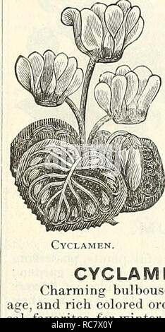 . Dreer's garden calendar for 1888. Seeds Catalogs; Nursery stock Catalogs; Gardening Catalogs; Flowers Seeds Catalogs. PER PKT. CONVOLVULUS MAJOR. (Morning Glory.) One of the most free flowering and rapid growing plants in cultivation, thriving in almost any situation ; the beauty and delicacy of their brilliant colors are unsur- passed ; hardy annuals ; 15 feet. 5623 C. Large Blue 5 5625— Large White 5 5621 — Burridgi. Flowers large rosy crimson, with a white centre 5 5630— Mixed. All colors. Per oz., 20 cts 5 5629 — Collection of Climbing Morning Glory, 10 varieties 40 COCCINEA. A handsome  - Stock Photo