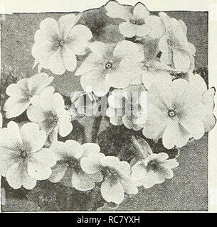 . Dreer's garden book for 1947. Seeds Catalogs; Nursery stock Catalogs; Gardening Equipment and supplies Catalogs; Flowers Seeds Catalogs; Vegetables Seeds Catalogs; Fruit Seeds Catalogs. HENRY A. DREER, Inc. Philadelphia, Pa.. Polyanthu-, Polyanthus [hpi ® a Primula veris elatior 3485 Large-Flowered Mixed. A very popular hardy perennial bearing during the spring showy, large flower clusters in a wide range of beautiful colors including yellow, orange, cream, pink, rose, crimson, lilac, purple, violet and white. Ex- cellent for beds or borders where it should occupy the foreground be- cause th - Stock Photo