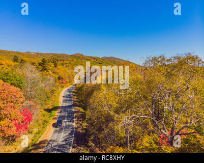 Aerial view of road in beautiful autumn forest at sunset. Beautiful landscape with empty rural road, trees with red and orange leaves. Highway through the park. Top view from flying drone. Nature - Stock Photo