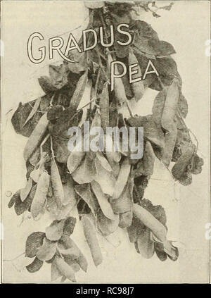 . Dreer's garden book 1925. Seeds Catalogs; Nursery stock Catalogs; Gardening Equipment and supplies Catalogs; Flowers Seeds Catalogs; Vegetables Seeds Catalogs; Fruit Seeds Catalogs. 36 ^flEI1KyA.BREEiamit<iAS^iUI*^:i^.lpM^^ Pais, Fr. GARDEN PEAS Guisanle, Sp. Erbscn, Ger. One pound will plant about fifty feet of drill. CULTURE —The very earliest sowing of peas may be made as early in March as the gardener can prep;ire a piece of ground because subsequent frosts do not hurt the young plants, especially those of the extra early smooth-seeded varieties. Sow in single or double rows 24 to 26  - Stock Photo