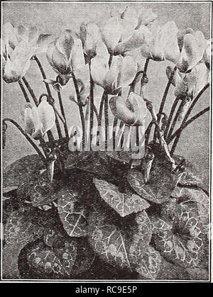 . Dreer's autumn catalogue 1932. Bulbs (Plants) Catalogs; Flowers Seeds Catalogs; Gardening Equipment and supplies Catalogs; Nurseries (Horticulture) Catalogs; Vegetables Seeds Catalogs. Shasta Daisy Alaska CerastlUm (Snow in Summer) PER pKT 1911 Tomentosum. A very pretty dwarf,- white-leaved edging plant, bearing small white flowers; hardy perennial. Splendid for rockery. Special pkt., 50 cts.. $0 IS Cheiranthus Very pretty dwarf hardy biennial plants, for early spring flowering sow in late summer. Splendid for the rockery. per pkt. 1915 Allionii {Siberian Wallflower). About 12 inches high wi - Stock Photo