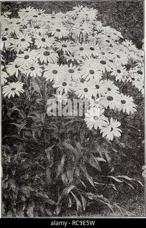 . Dreer's autumn catalogue 1932. Bulbs (Plants) Catalogs; Flowers Seeds Catalogs; Gardening Equipment and supplies Catalogs; Nurseries (Horticulture) Catalogs; Vegetables Seeds Catalogs. RELIABLE FLOWER SEEDSi PHIMDELPHR^ 71. Shasta Daisy Alaska CerastlUm (Snow in Summer) PER pKT 1911 Tomentosum. A very pretty dwarf,- white-leaved edging plant, bearing small white flowers; hardy perennial. Splendid for rockery. Special pkt., 50 cts.. $0 IS Cheiranthus Very pretty dwarf hardy biennial plants, for early spring flowering sow in late summer. Splendid for the rockery. per pkt. 1915 Allionii {Siberi - Stock Photo