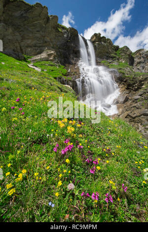 Alpine wildflowers blooming in front of the Nassfeld waterfall in the Hohe Tauern National Park, Carinthia / Kärnten, Austria - Stock Photo