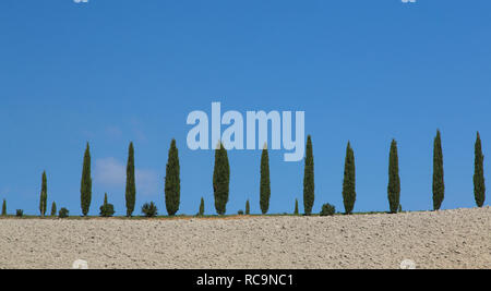 Cypresses tree in a horizontal row against a blue sky, Tuscany, Italy. - Stock Photo