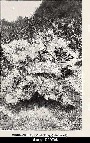 . Ellwanger & Barry : Mount Hope nurseries. GENERAL CATALOGUE. 47 being a tree of fine form, its foliage is of a grayish green color, glossy and handsome, and in the autumn turns to a deep red, render- ing the tree one of the most showy and beautiful objects at that season. We regard it, all things considered, as one of the most valuable trees for ornamental planting, rank- ing next to the Magnolia among flowering trees, and only second to the Scarlet Oak (â which it almost equals) in brilliant foliage in autumn. $1.00. var fiore rubro. Red-flowered Dogwood. B. Recently introduced. A varie - Stock Photo
