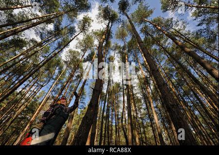 Holzfäller bei der Arbeit im Wald | wood feller working in the woods - Stock Photo